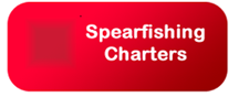 spearfishing charters